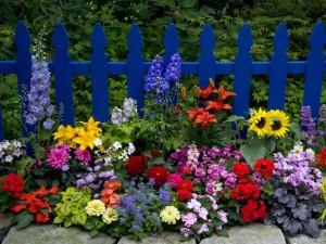 0-strat de flori colorate decor gradina
