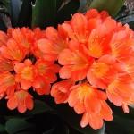 Plante perene cu flori pentru un balcon umbrit