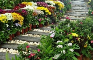 1-alee frumoasa pentru gradina din scandura si pietris