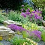 6 flori perene spectaculoase pentru gradini cu soluri pietroase si rocarii