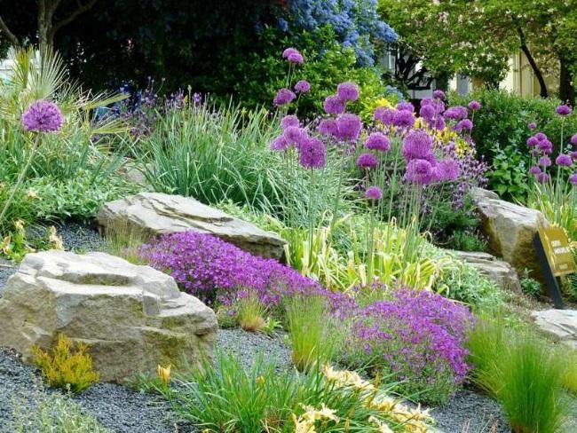 1-aranjament cu pietre si plante perene rezistente la seceta in gradina