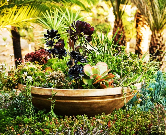 1-aranjament decorativ din plante suculente amenajare gradina