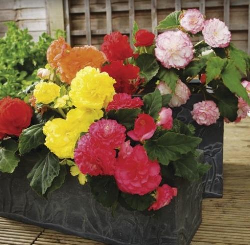 Alergic la polen? Iata 10 flori pe care le poti planta in gradina