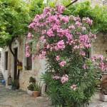 Case din Peloponez – printre maslinii si soarele Greciei