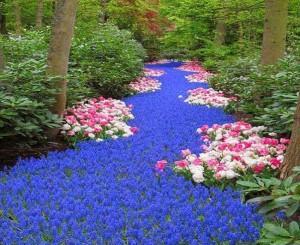 1-combinatii de flori albastre roz si albe
