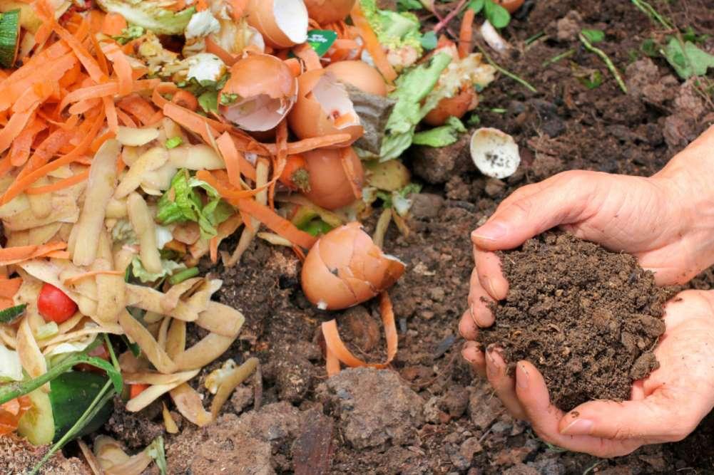 1-compost-natural-gradina-legume