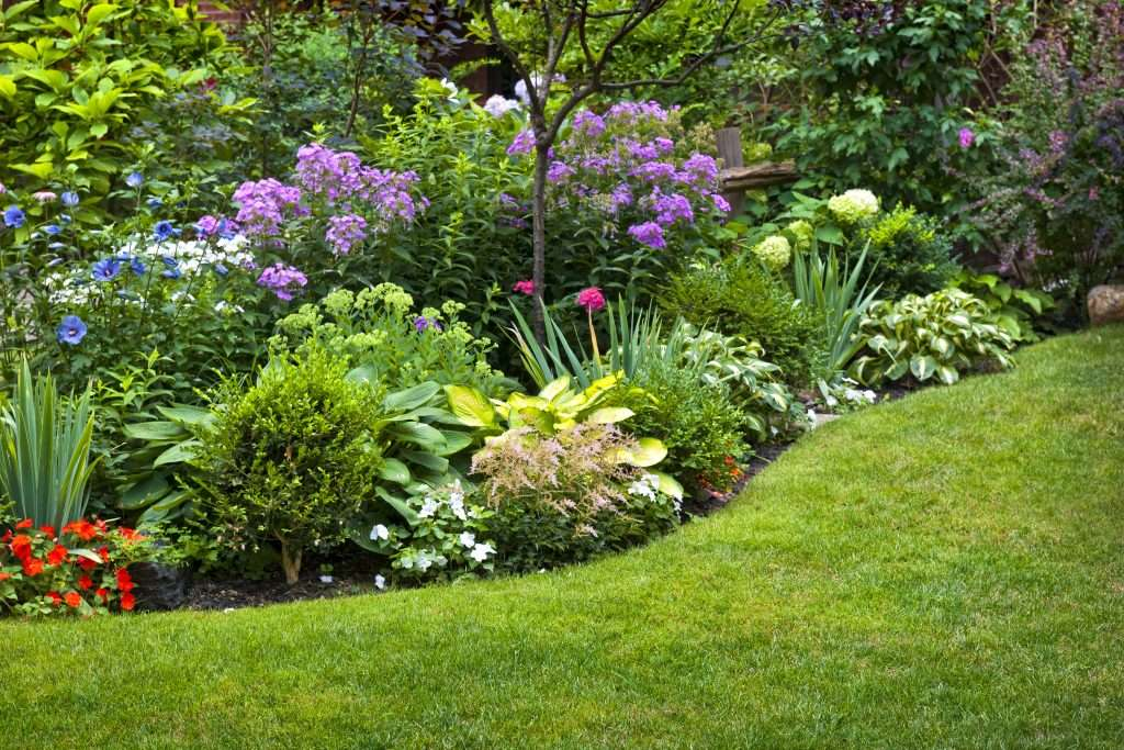 1-gradina-flori-perene-gazon-arbusti-ornamentali