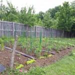 1 gradina legume casa la tara