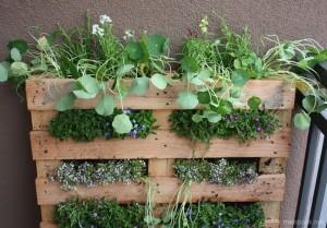 1-gradina verticala decorativa intr un palet din lemn reciclat