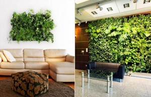 1-gradinile verticale in amenajarile interioare moderne cu influente eco