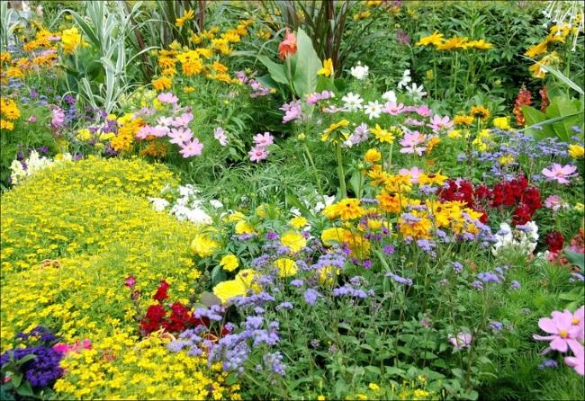 1-grup de flori colorate decor gradina
