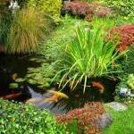 Plantele acvatice – plamanii iazului ornamental din curtea casei