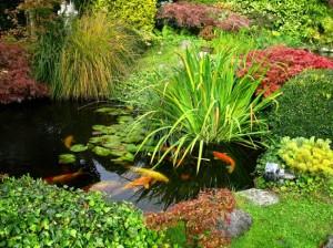 1-lac ornamental cu multe plante acvatice