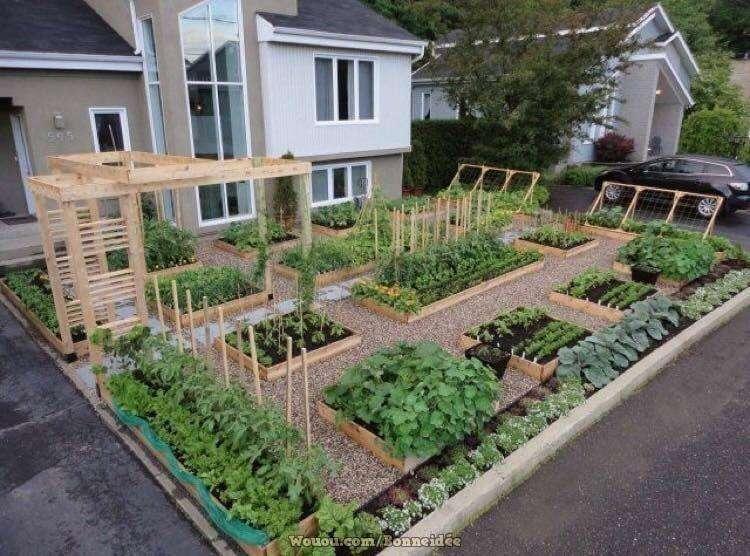 1-model-gradina-legume-organizata-straturi-inaltate