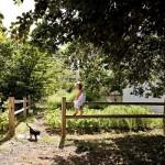 10-gard lemn imprejmuire curte casa lemn 50 metri patrati renovata