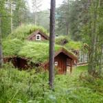10-strat izolatie ecologica acoperis cu vegetatie