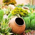 11-aranjament de gradina cu plante suculente