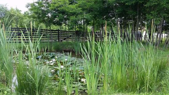 lac nuferi pescuit casa vacanta Arges