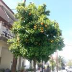 11 - portocal grecia asprovalta