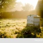 11-stup cu albine ferma rustica walnuts famr marea britanie