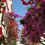 13-bougainvillea de diferite culori decorand casele din Nafplio