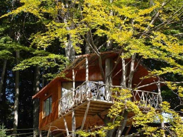 13-casa din lemn construita in copac complex Harmonie Predeal