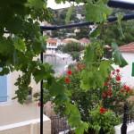 13-vita de vie curte casa de pe malul marii Asos Kefalonia