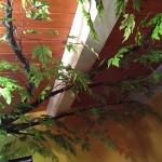 14-crengi imbracate cu frunze artificiale copac din beton armat camera fiicei lui Rob Adams