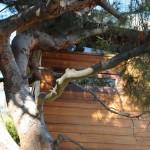 14-exterior casuta birou din copac