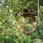 15-dus de gradina cabana din lemn de pin 70 mp