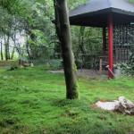 15-foisor din lemn in apropierea casei de vacanta in forma de iurta Olanda