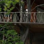 15-terasa casutei din copac complex Harmonie Predeal