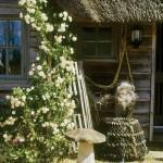 16-aranjament decorativ rustic si trandafiri cataratori casuta vacanta pe malul marii