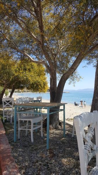 17-pomi infloriti pe faleza din Paralio Astros Peloponez Grecia
