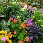2-aranjament floral de gradina din flori anuale si perene