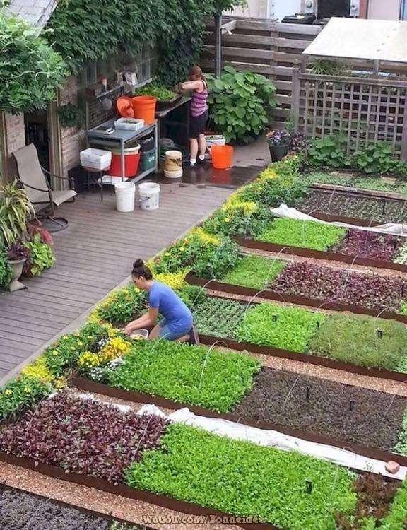 2-cultivare-salata-asortata-straturi-inaltate