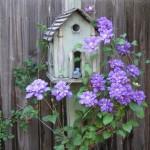 2-decoratiune de gradina si planta caratatoare decor gard