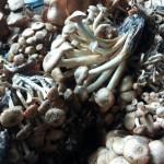 2-ghebe proaspete pentru zacusca de ghebe