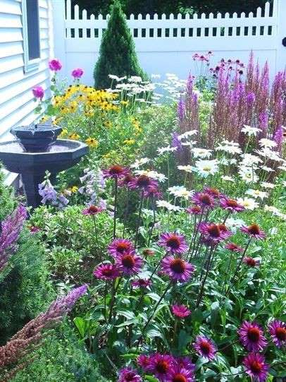 2-margarete-echinacea-flori-vara-gradina