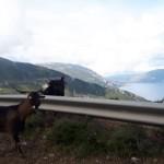23-capre pe soselele din insula Kefalonia Grecia