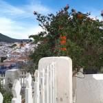 26-arbust cu flori rosii printre case si garduri albe insula Hydra Grecia