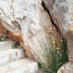27-flori de primavara rasarite din stanca insula Hydra Grecia
