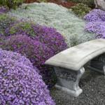 5 plante perene de vara cu flori minunat colorate