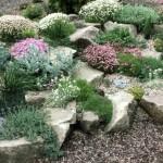 3-arenaria montana cu flori pitice albe decor rocarie