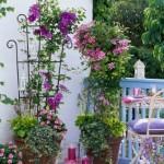 3-combinatii de clematis roz si mov si sporul casei roz amenajare balcon de vara