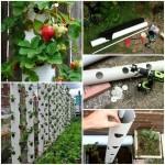3-cultivare capsuni pe verticala din tevi idei gradina mica