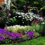 3-gruparea florilor in amenajarea unei gradini mici