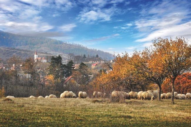 vedere sat Vale Marginimee Sibiului