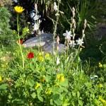 31-flori de camp pe insula Hydra Grecia