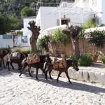 38-magari la coborarea in port dupa alte incarcaturi Hydra Grecia